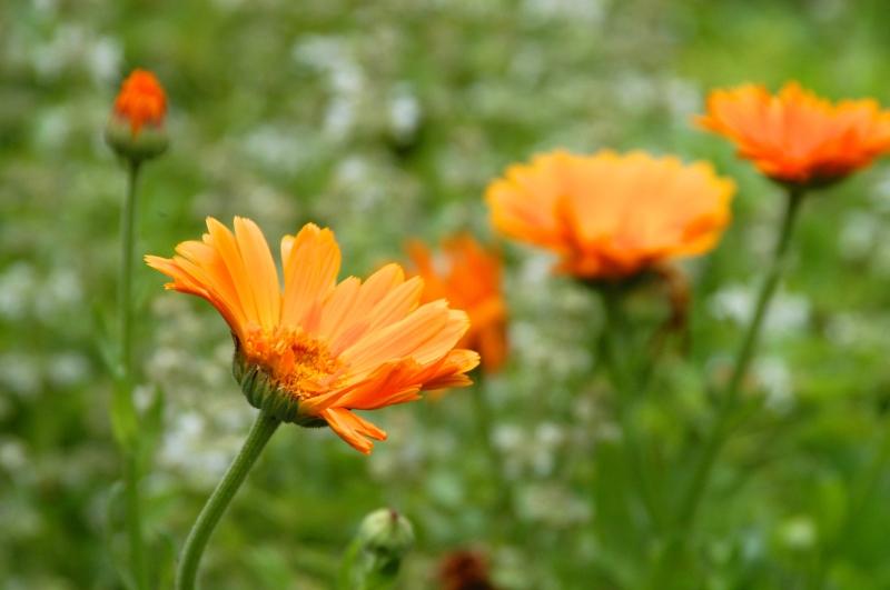 Orange Flowrs