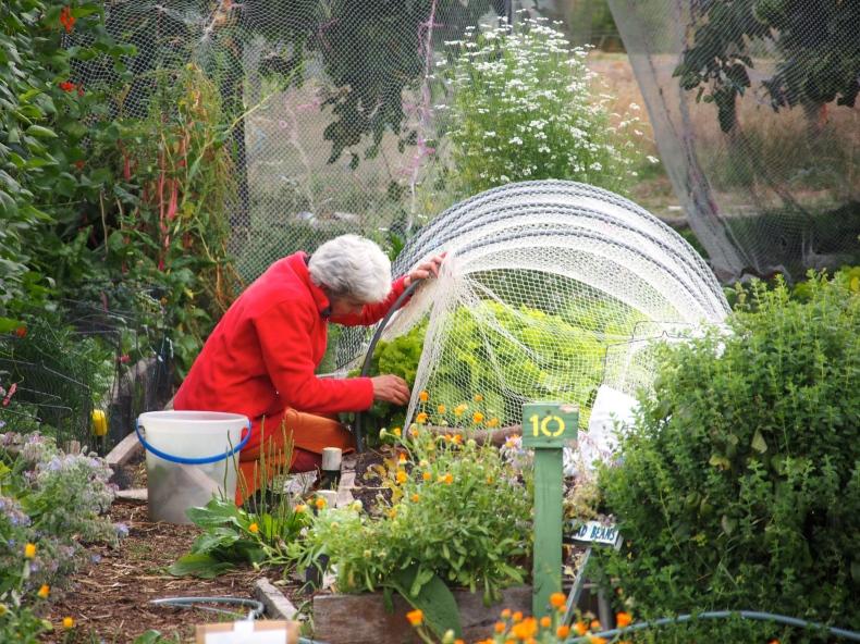 kitchen garden red.JPG