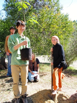 Planting a new chestnut tree.